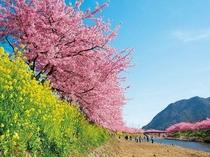 河津桜まつり・みなみの桜と菜の花まつりにもアクセス良