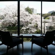 目の前に咲くソメイヨシノ