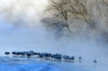 タンチョウ川冬