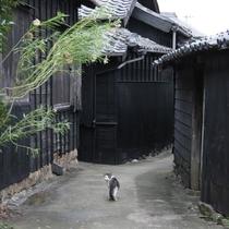 佐久島「黒壁家の路地裏と猫」
