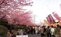 伊豆高原駅前の桜祭り