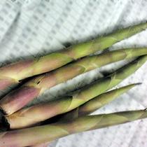 6月が旬の『根曲がり竹』