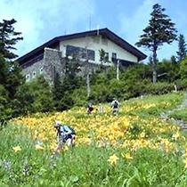 東館山高山植物園コース