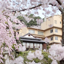 春には庭園が桜に包まれます