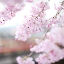 庭園を彩る花々たち