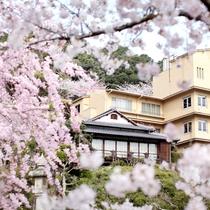 春には満開の桜に囲まれて