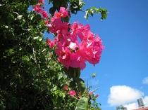 【沖縄の自然】色鮮やかな沖縄の自然に触れる