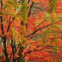 軽井沢の紅葉