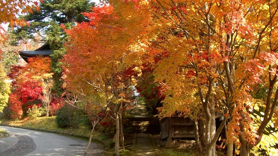 紅葉を楽しみながらのお寺めぐりもおすすめです。天照寺まではアルピナから徒歩20分ほど。
