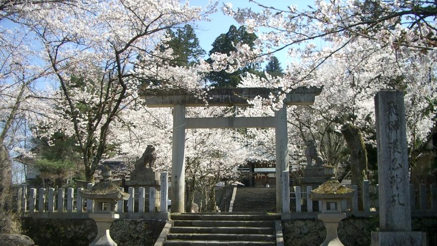 アルピナから徒歩15分ほどの護国神社の桜は、お堀に散った後の「花筏」も見事です。