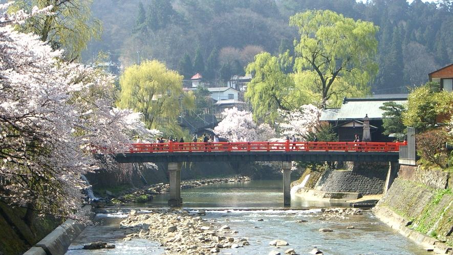 赤い中橋と宮川沿いの桜。高山の桜は、例年4月中旬ごろが見頃です。