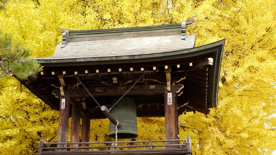 飛騨国分寺の大イチョウ。黄色い葉が全部落ちると雪が降る、と昔から言われています。
