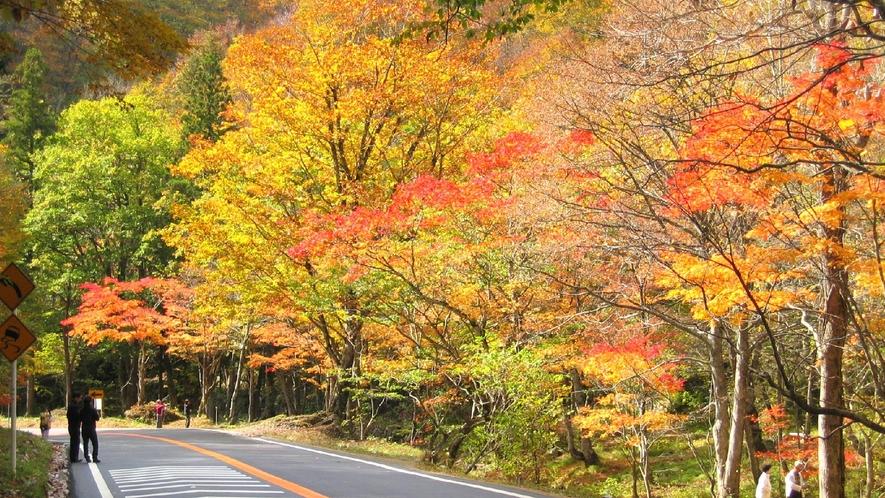 紅葉の中をドライブできるせせらぎ街道は、秋に人気があります。(わき見運転に注意!)