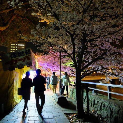 夜の市街地(熊本城近くの桜)