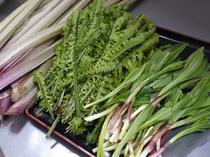 朝取り山菜