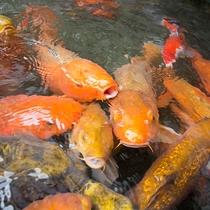 *【施設(中庭)】庭園の池には、美しい鯉が悠々と泳いでいます。ほっと一息しませんか。