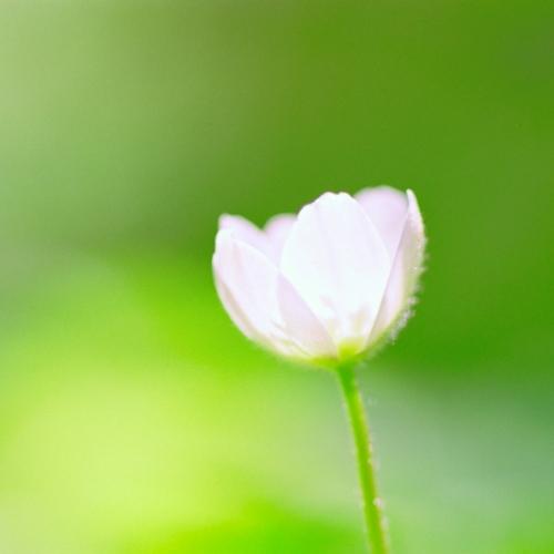 可憐な花弁