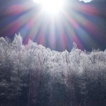 11月の霧氷(ホテル玄関より)