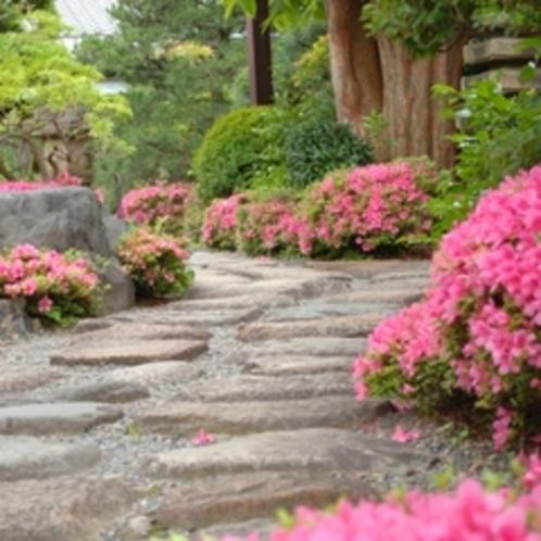 足元を照らすつつじ(春の庭)