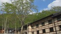 洋室からは大きなブナの木と野鳥が見られます