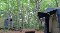 ブナ林に囲まれた常設テント