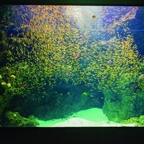 アクアマリンふくしま入場券付プラン♪ サンゴ礁の海