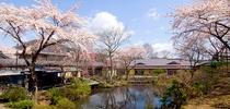 満開の桜と本館全体