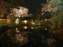 庭園から望む満開の桜と外観夜景-2