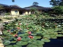 スイレンが咲く池と本館