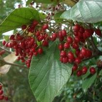 [はなの舞 四季だより]秋の花 白山木の実