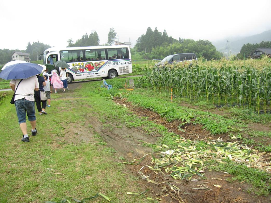 自社農園 トウモロコシ(7月中旬〜8月中旬)
