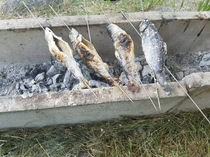 魚つかみ(夏休み期間中)