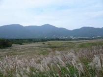 色づいた すすき草原