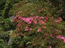お庭では季節のお花をお楽しみ頂けます