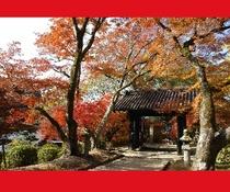 【秋月城跡「黒門」の紅葉】車で20分 11月下旬~12月上旬 露店も並び、散策にぴったり!