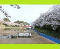 【甘木公園・通称丸山公園】車で約7分 県下屈指の桜の名所。また約5000株のつつじも見ごたえあり