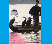 【筑後川鵜飼】主に原鶴温泉付近で「観覧船」が毎年5/20~9/末まで出ています。