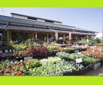 【道の駅・三連水車の里】車で15分 地元の美味しいもの、花や苗物も買えます!