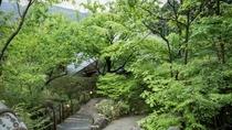 新緑の季節。瑞々しい樹々に囲まれて歩く。
