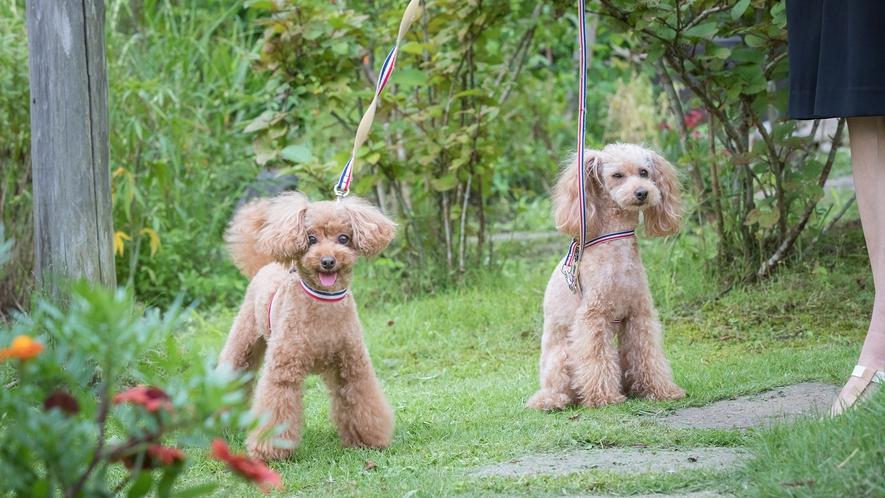 ■ドッグラン■愛犬もかけがえのない家族。