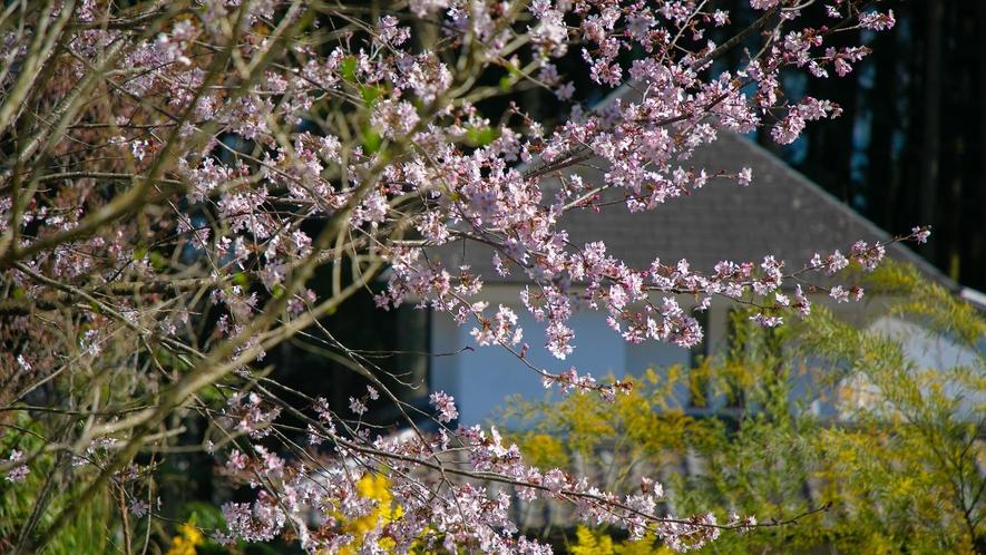 ■季節の庭花■