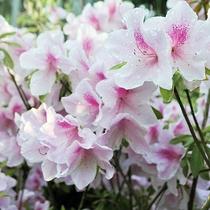 【季節の庭花】