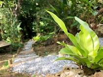 海坐の森の植物たち