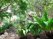 森の遊歩道