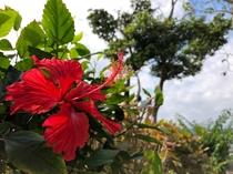 海坐の花々たち