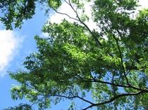 磐梯熱海の初夏の空