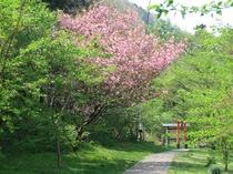 春のケヤキの森(1)