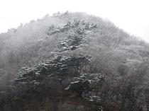初冬の裏山