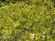 磐梯熱海の新緑