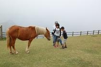 国賀海岸の馬や牛たち
